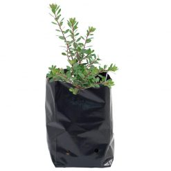 black plastic grow bags